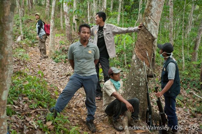 AWalmsley-orangutan rescue blog-008
