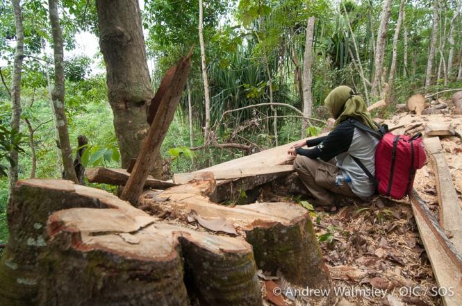 AWalmsley-orangutan rescue blog-009