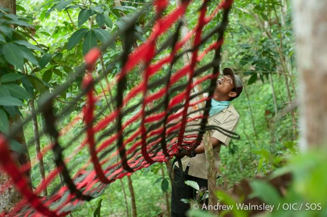 AWalmsley-orangutan rescue blog-011