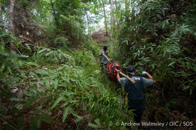 AWalmsley-orangutan rescue blog-018